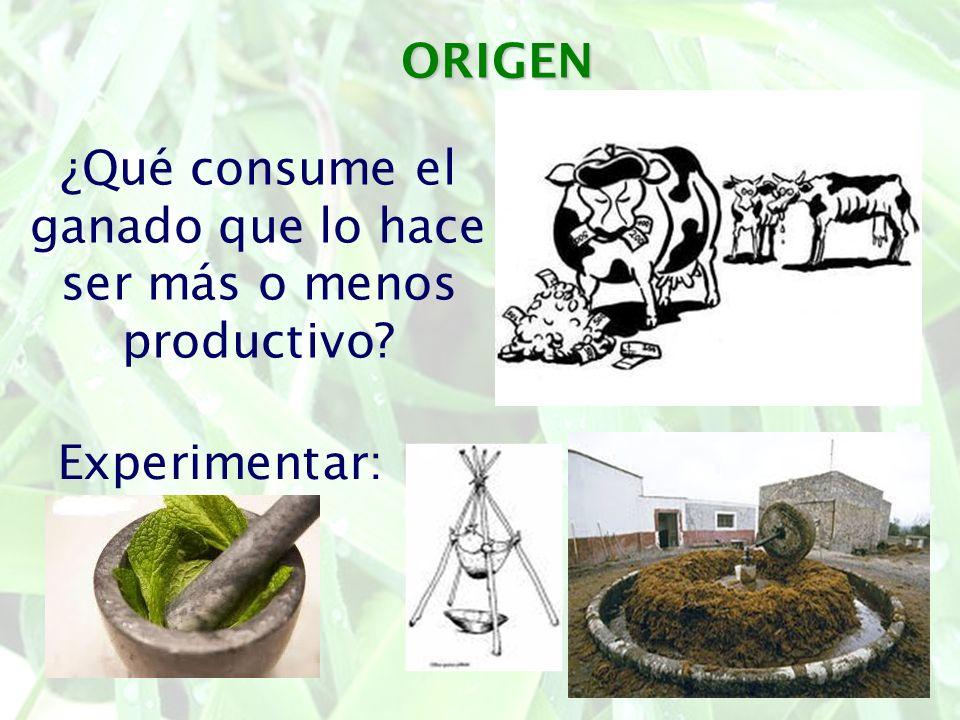¿Qué consume el ganado que lo hace ser más o menos productivo
