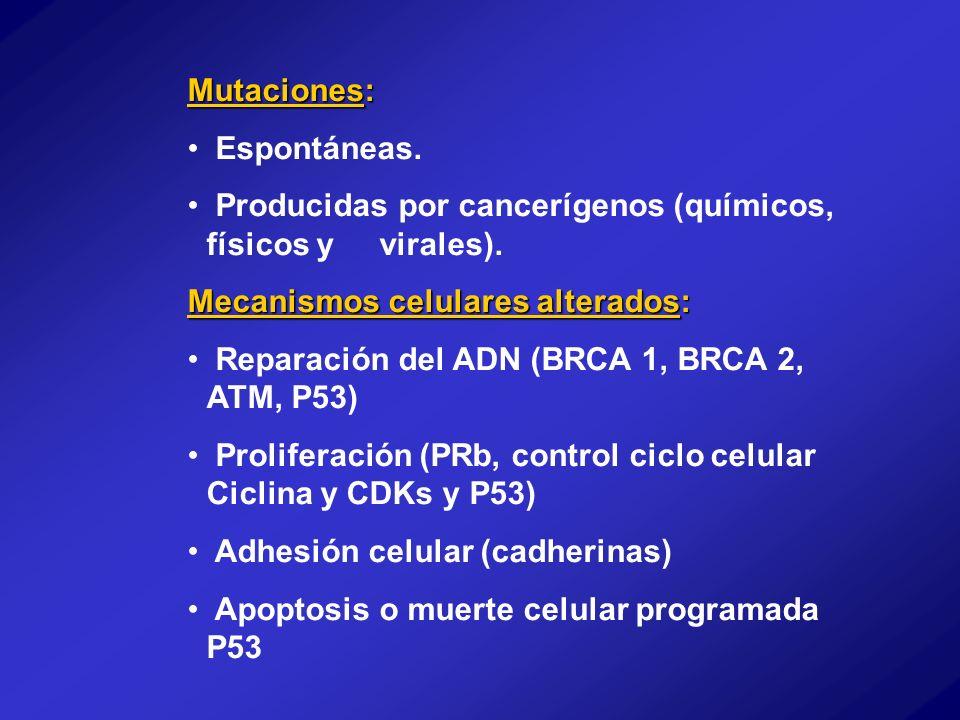 Mutaciones: Espontáneas. Producidas por cancerígenos (químicos, físicos y virales). Mecanismos celulares alterados: