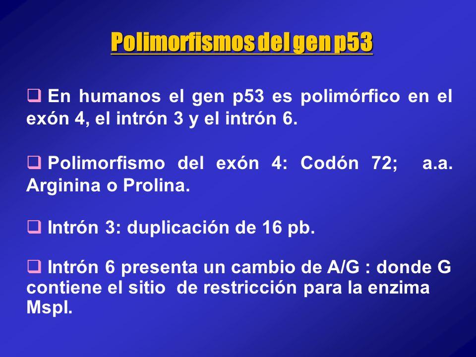 Polimorfismos del gen p53