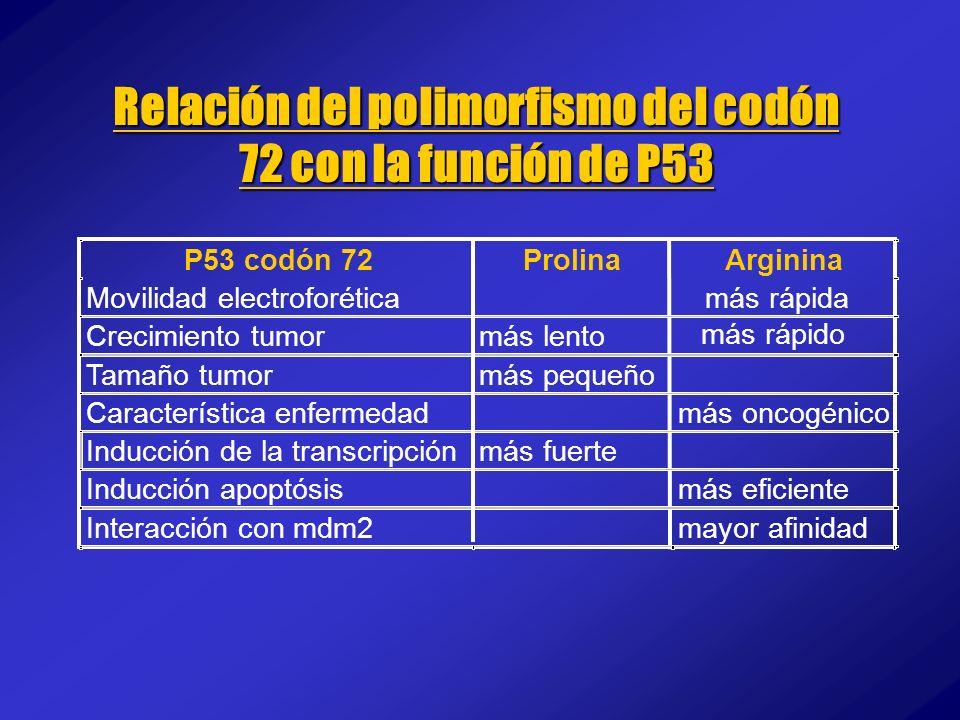 Relación del polimorfismo del codón 72 con la función de P53