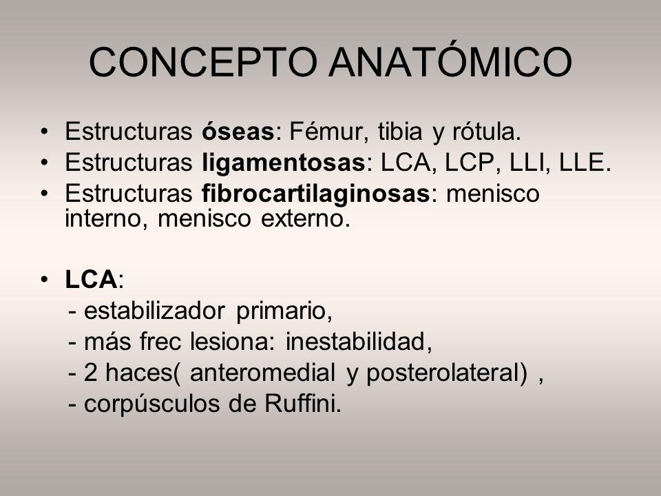 CONCEPTO ANATÓMICO Estructuras óseas: Fémur, tibia y rótula.