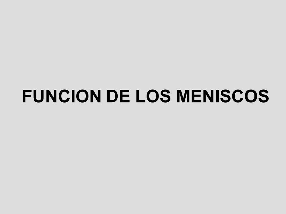 FUNCION DE LOS MENISCOS