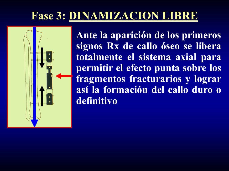 Fase 3: DINAMIZACION LIBRE