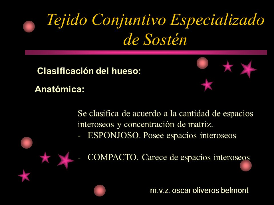 Tejido Conjuntivo Especializado de Sostén