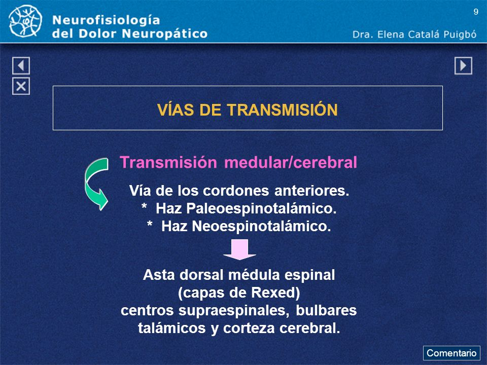 Transmisión medular/cerebral