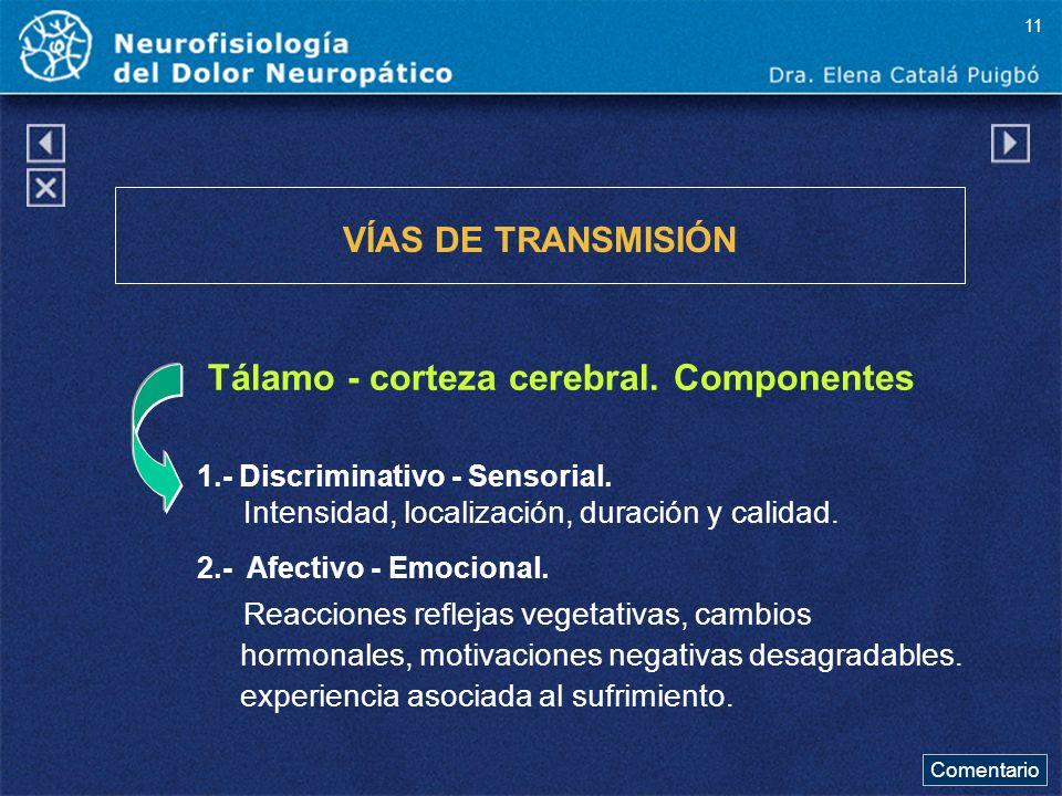 Tálamo - corteza cerebral. Componentes