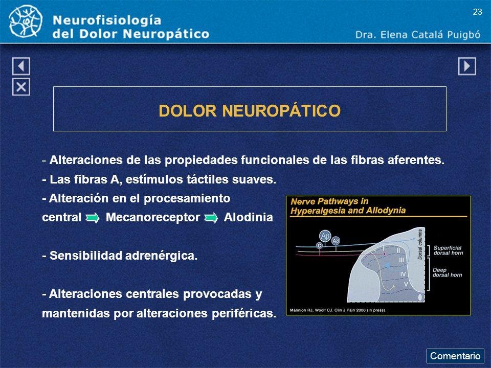 23 DOLOR NEUROPÁTICO. - Alteraciones de las propiedades funcionales de las fibras aferentes. - Las fibras A, estímulos táctiles suaves.