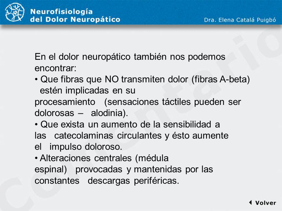 Comentario a diapo24 En el dolor neuropático también nos podemos encontrar: Que fibras que NO transmiten dolor (fibras A-beta)