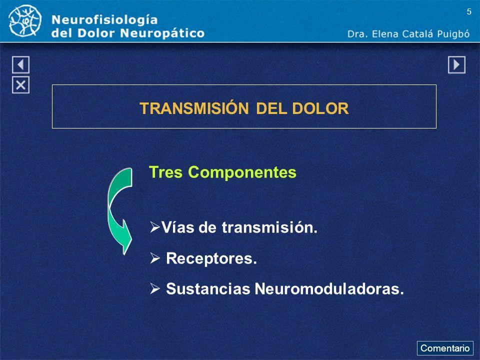 Tres Componentes TRANSMISIÓN DEL DOLOR Vías de transmisión.