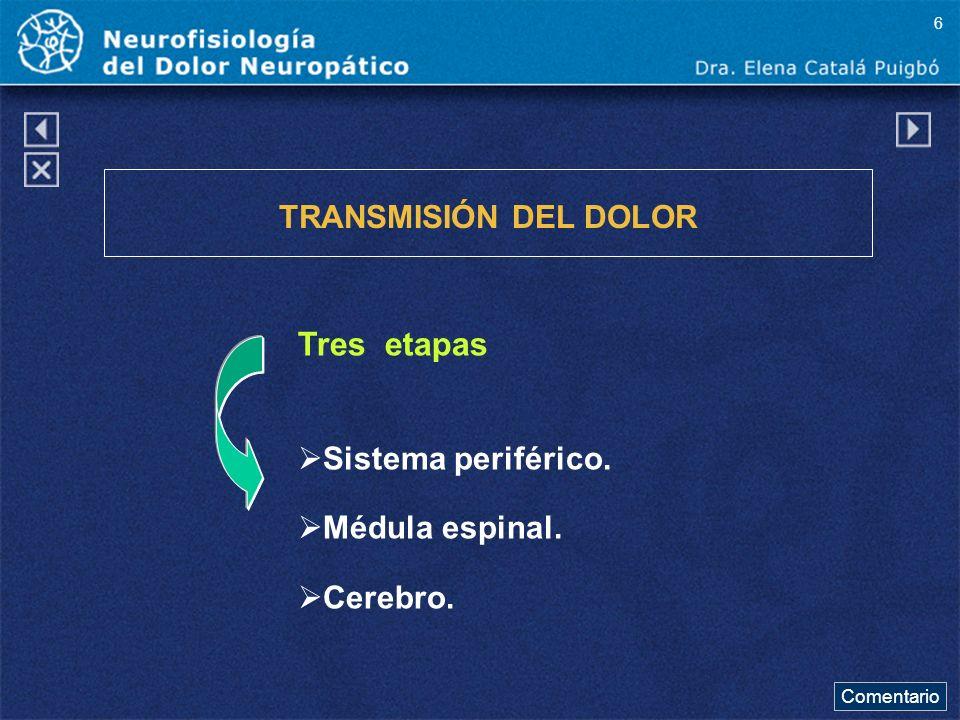 Tres etapas TRANSMISIÓN DEL DOLOR Sistema periférico. Médula espinal.