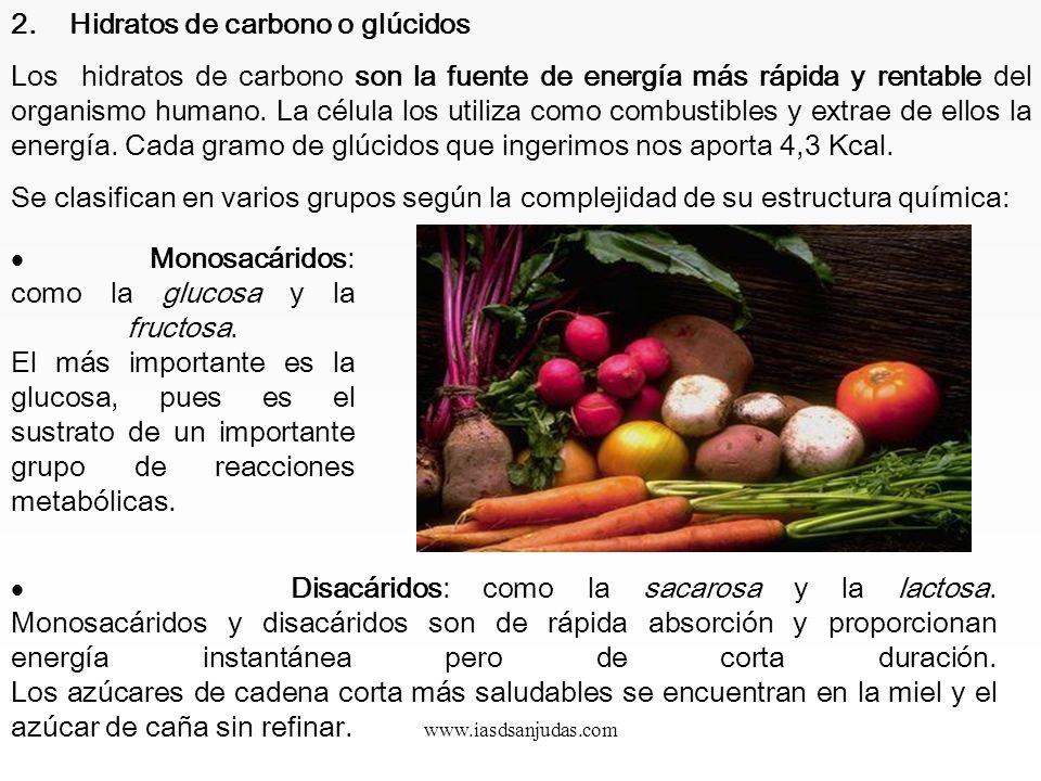 2. Hidratos de carbono o glúcidos
