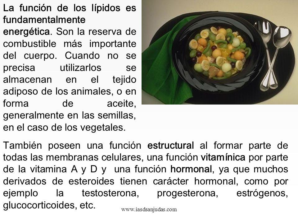 La función de los lípidos es fundamentalmente energética