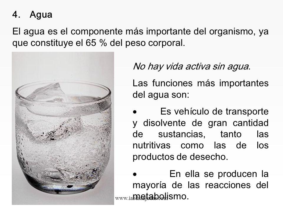 No hay vida activa sin agua.