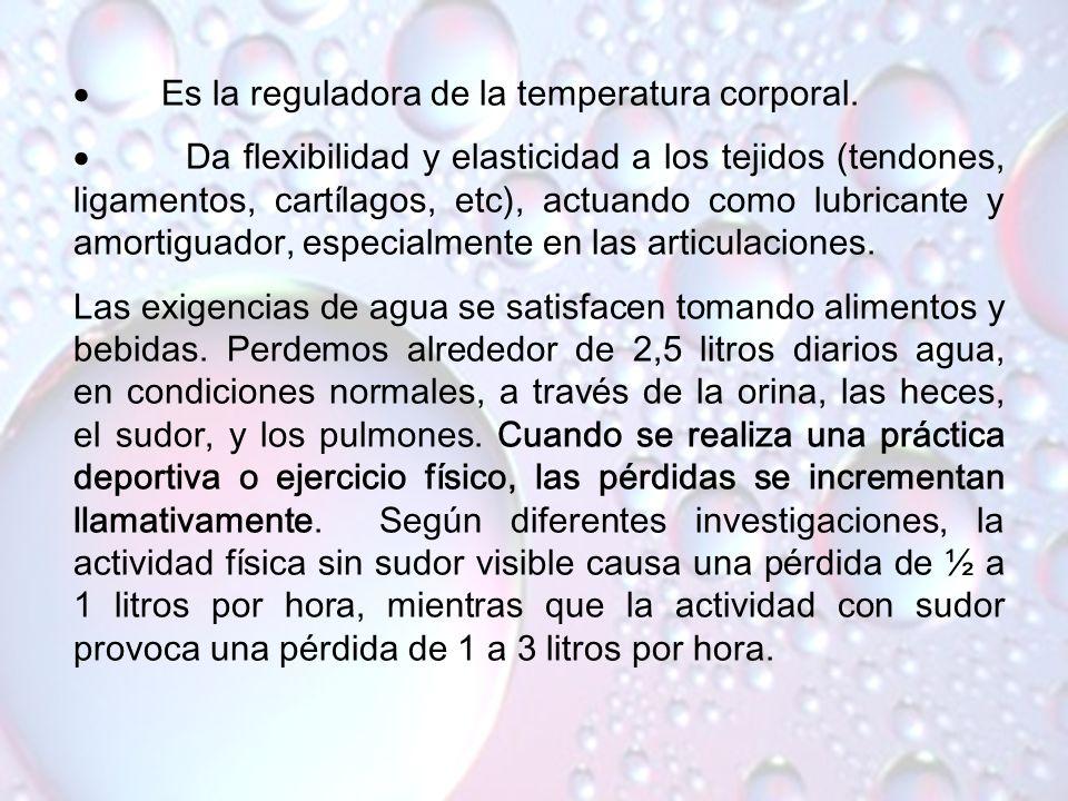 · Es la reguladora de la temperatura corporal.