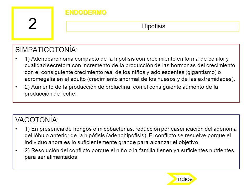 2 SIMPATICOTONÍA: VAGOTONÍA: ENDODERMO Hipófisis Índice