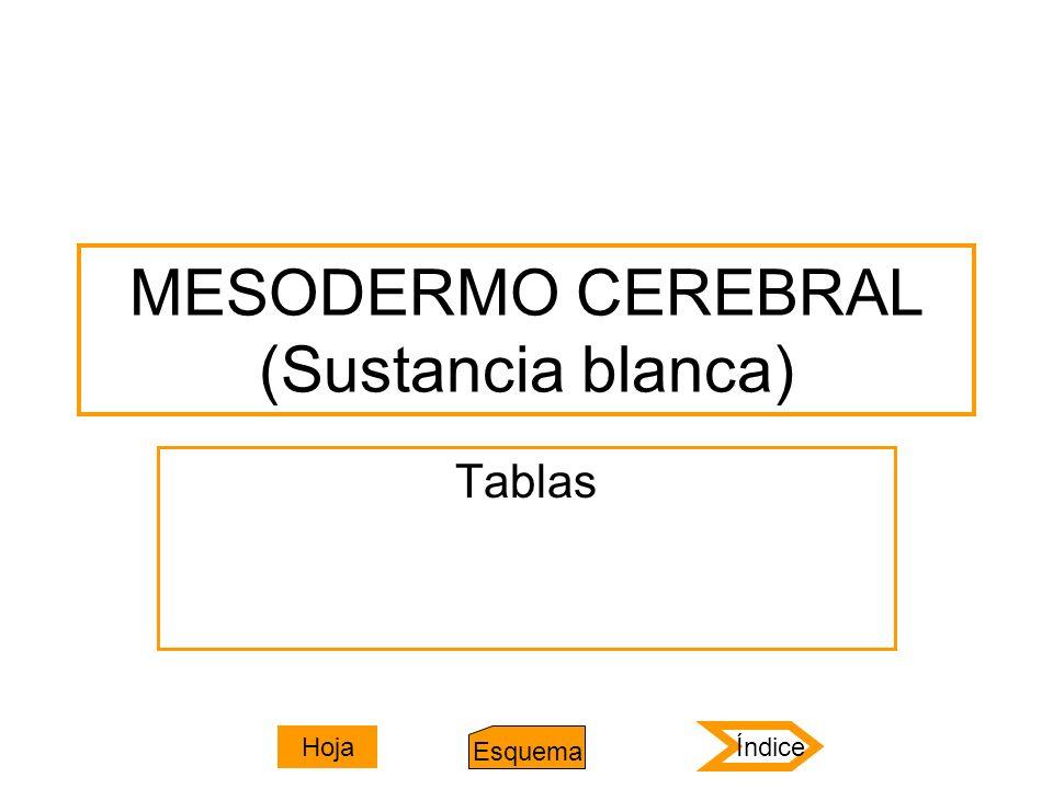 MESODERMO CEREBRAL (Sustancia blanca)