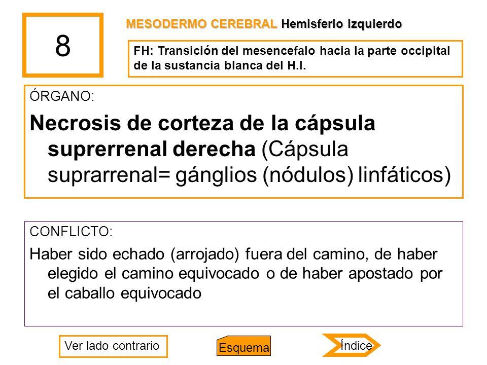 8 MESODERMO CEREBRAL Hemisferio izquierdo. FH: Transición del mesencefalo hacia la parte occipital de la sustancia blanca del H.I.