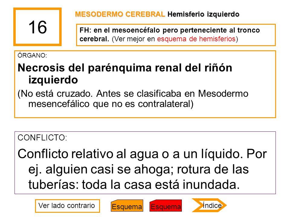 16 MESODERMO CEREBRAL Hemisferio izquierdo. FH: en el mesoencéfalo pero perteneciente al tronco cerebral. (Ver mejor en esquema de hemisferios)