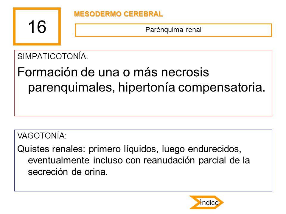 16 MESODERMO CEREBRAL. Parénquima renal. SIMPATICOTONÍA: Formación de una o más necrosis parenquimales, hipertonía compensatoria.