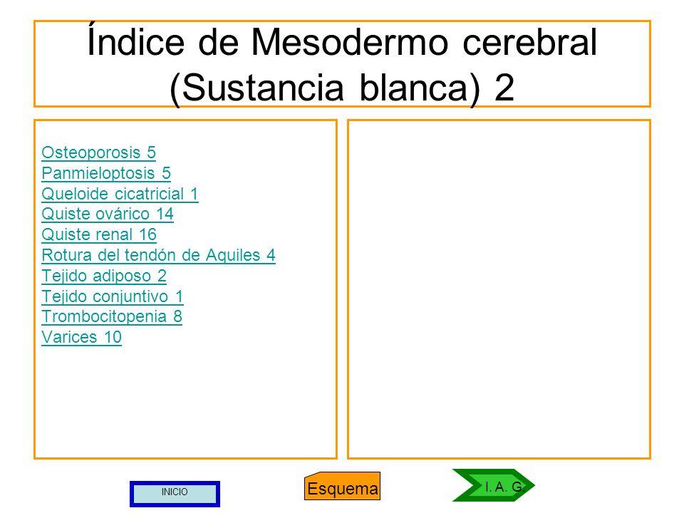 Índice de Mesodermo cerebral (Sustancia blanca) 2