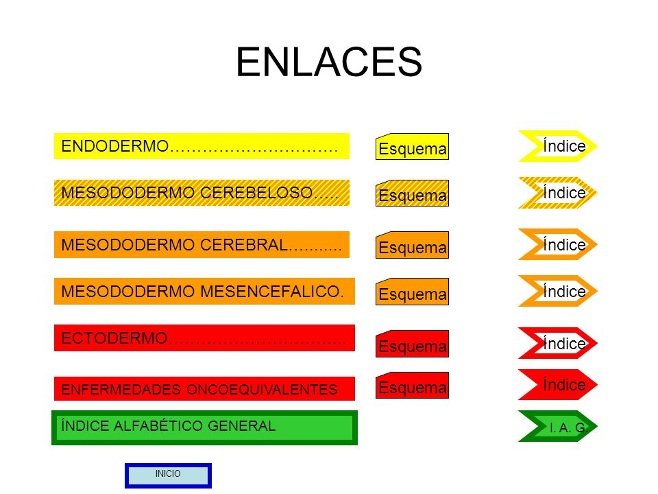 ENLACES ENDODERMO…………………………. Esquema Índice MESODODERMO CEREBELOSO…..