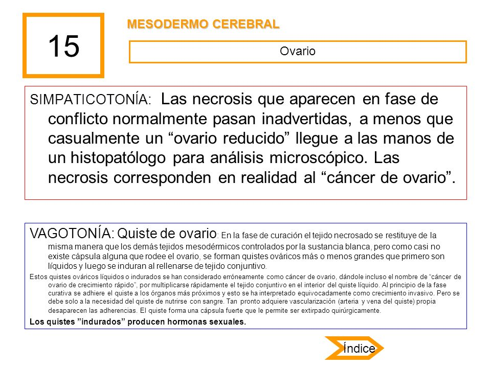 15 MESODERMO CEREBRAL. Ovario.