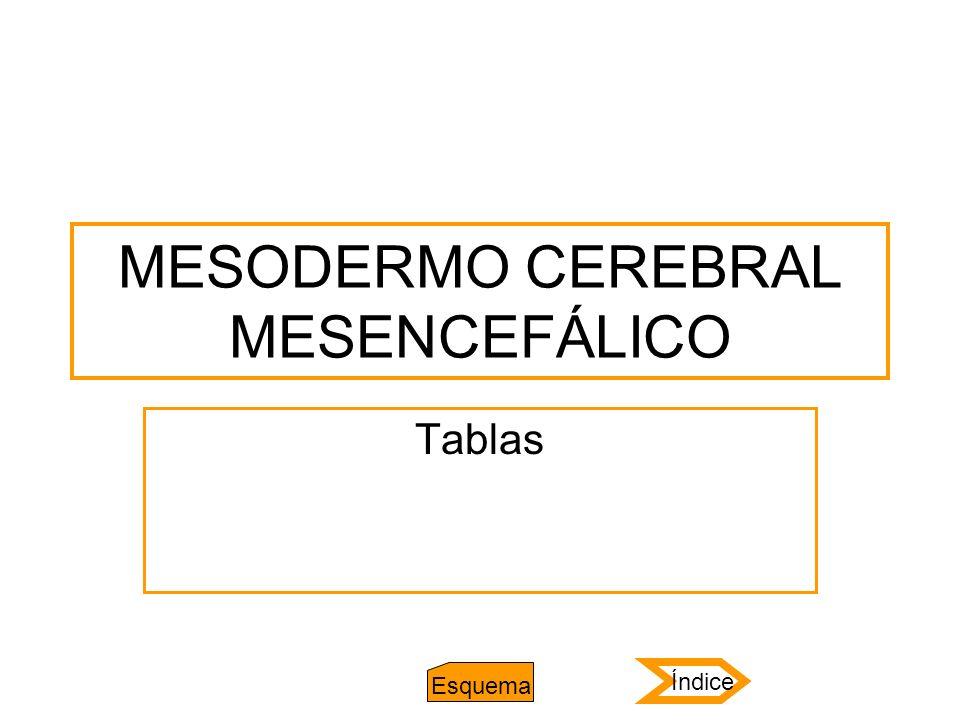 MESODERMO CEREBRAL MESENCEFÁLICO