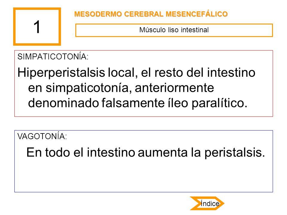 Músculo liso intestinal