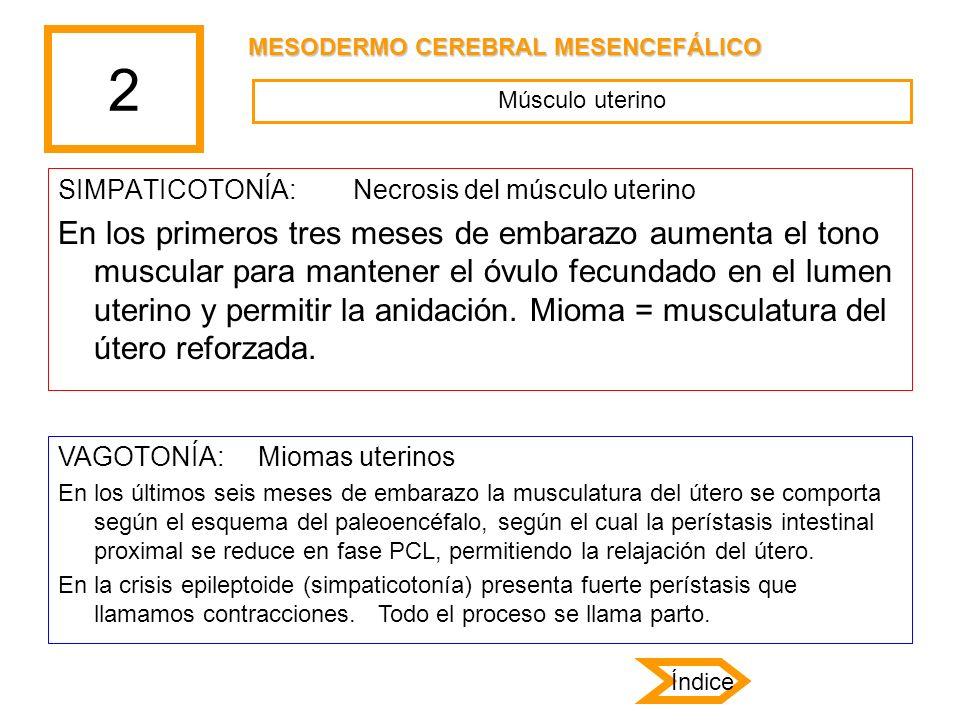 2 MESODERMO CEREBRAL MESENCEFÁLICO. Músculo uterino. SIMPATICOTONÍA: Necrosis del músculo uterino.