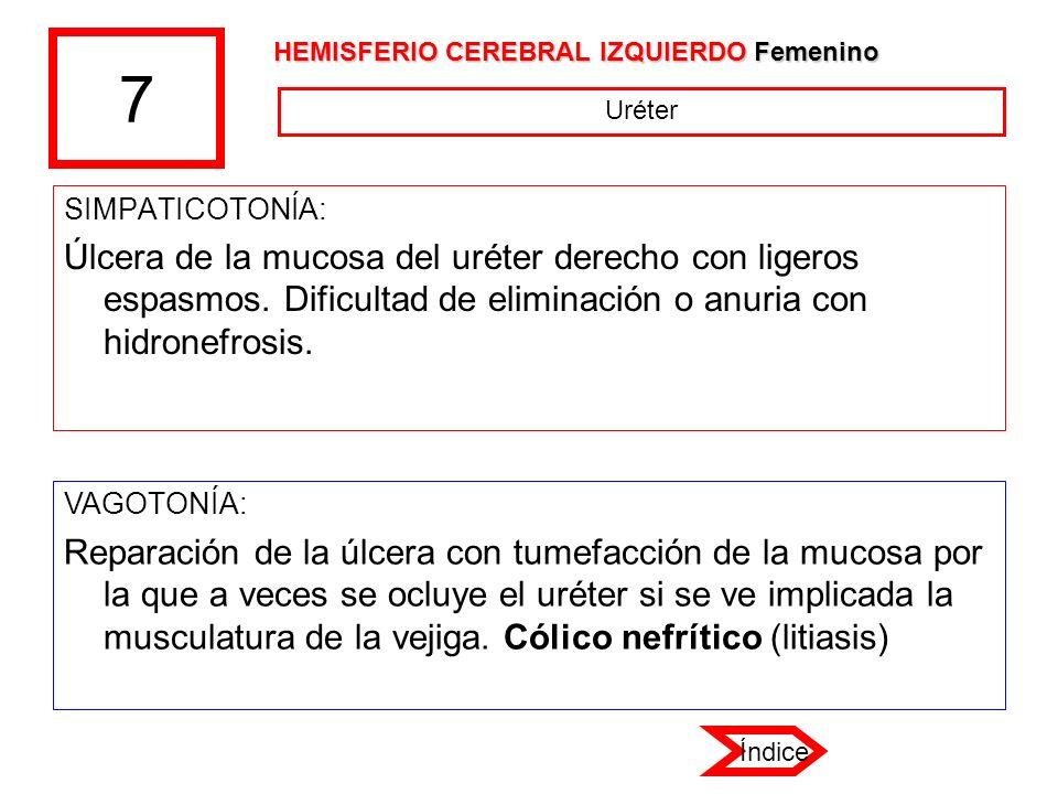 7 HEMISFERIO CEREBRAL IZQUIERDO Femenino. Uréter. SIMPATICOTONÍA:
