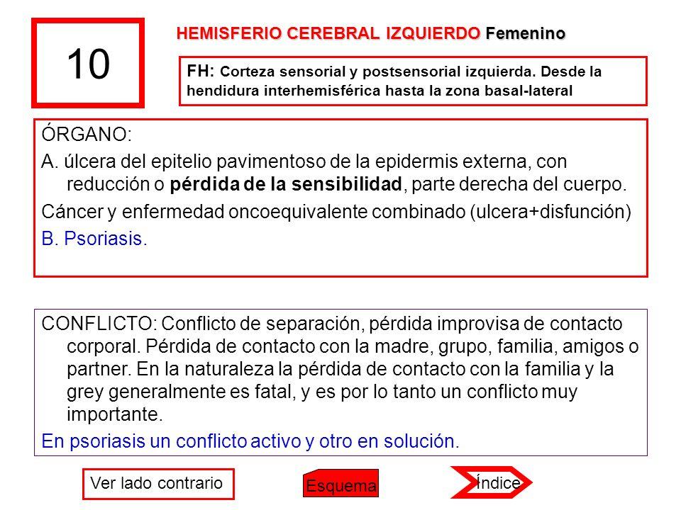10 HEMISFERIO CEREBRAL IZQUIERDO Femenino.