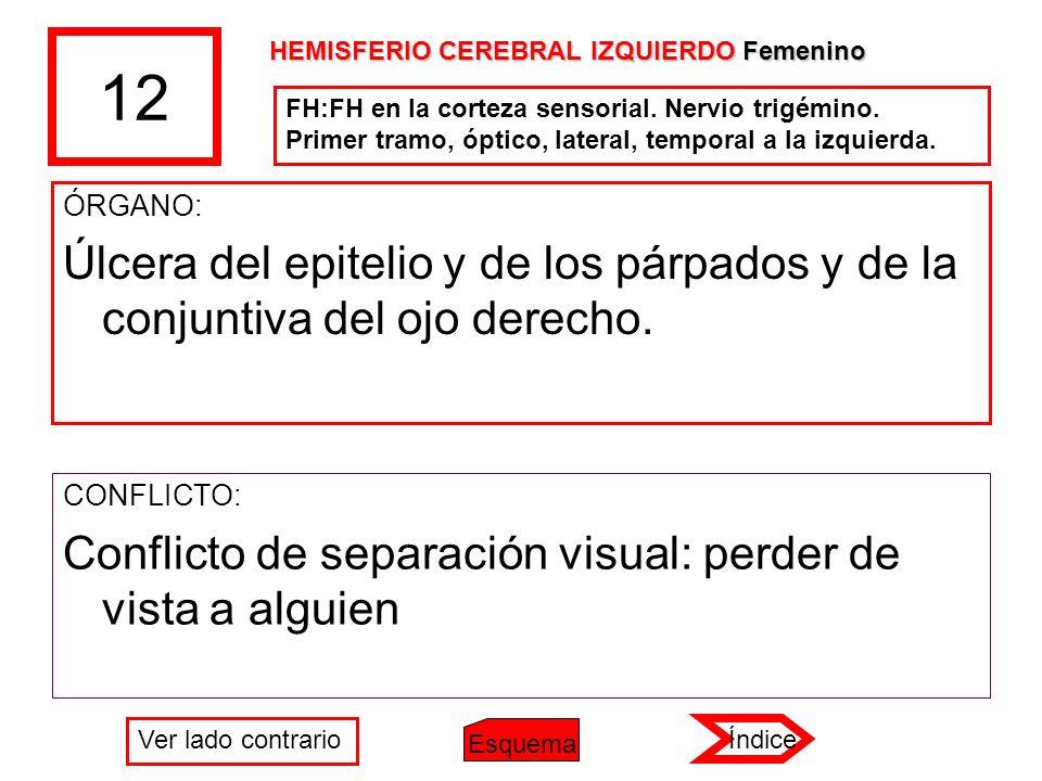 12 HEMISFERIO CEREBRAL IZQUIERDO Femenino. FH:FH en la corteza sensorial. Nervio trigémino. Primer tramo, óptico, lateral, temporal a la izquierda.