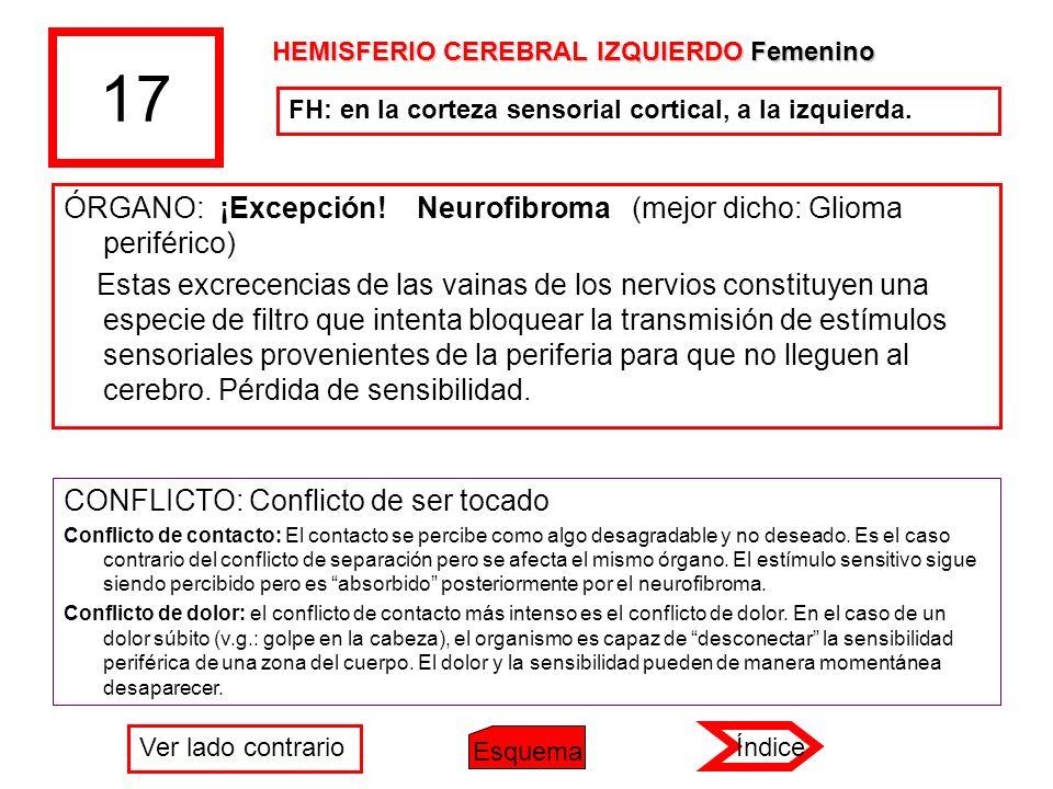 17 ÓRGANO: ¡Excepción! Neurofibroma (mejor dicho: Glioma periférico)