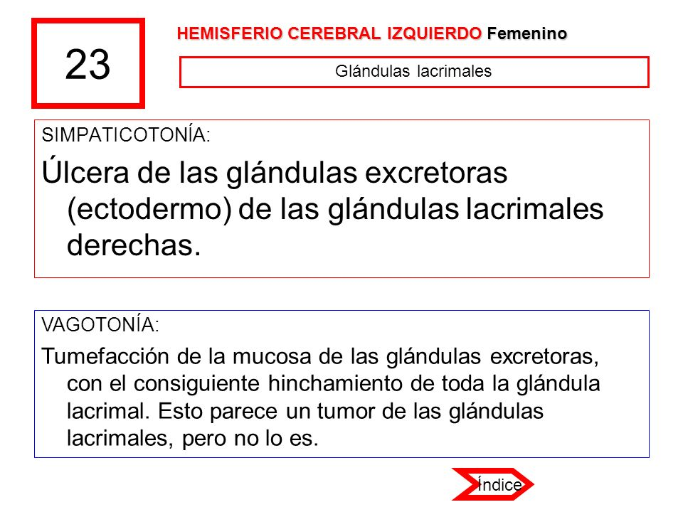 23 HEMISFERIO CEREBRAL IZQUIERDO Femenino. Glándulas lacrimales. SIMPATICOTONÍA: