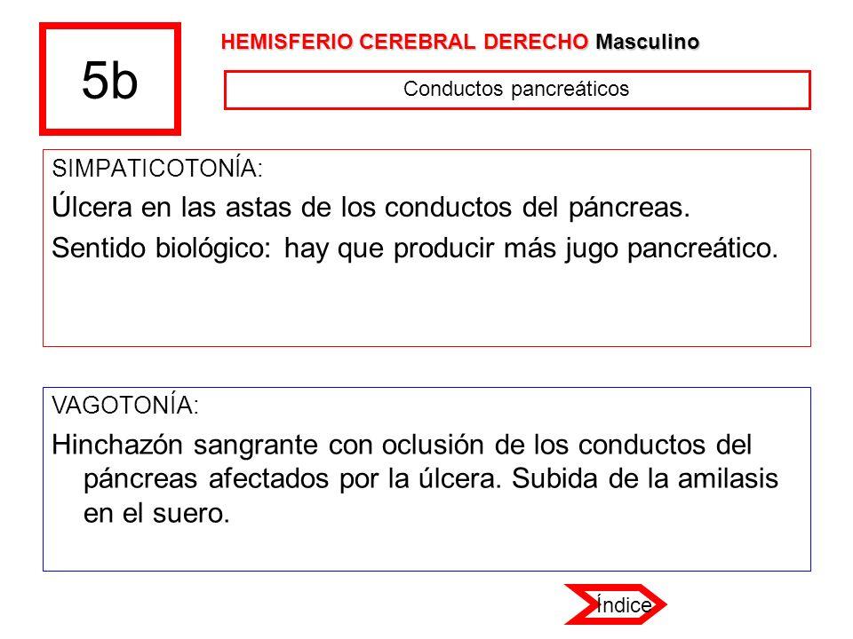 Conductos pancreáticos