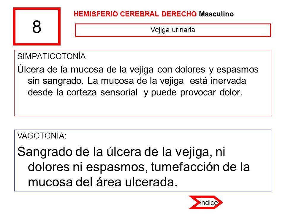 8 HEMISFERIO CEREBRAL DERECHO Masculino. Vejiga urinaria. SIMPATICOTONÍA: