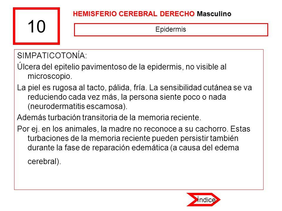 10 HEMISFERIO CEREBRAL DERECHO Masculino. Epidermis. SIMPATICOTONÍA: Úlcera del epitelio pavimentoso de la epidermis, no visible al microscopio.