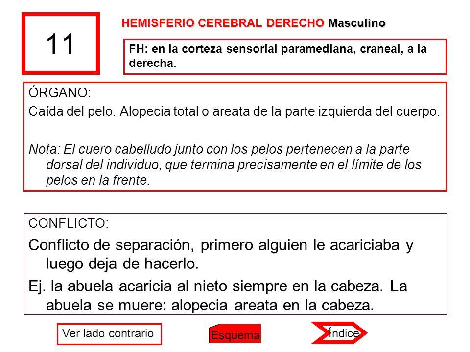 11 HEMISFERIO CEREBRAL DERECHO Masculino. FH: en la corteza sensorial paramediana, craneal, a la derecha.