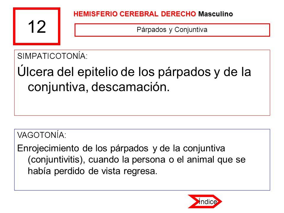 12 HEMISFERIO CEREBRAL DERECHO Masculino. Párpados y Conjuntiva. SIMPATICOTONÍA: