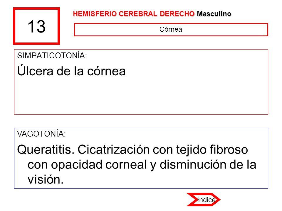 13 HEMISFERIO CEREBRAL DERECHO Masculino. Córnea. SIMPATICOTONÍA: Úlcera de la córnea. VAGOTONÍA: