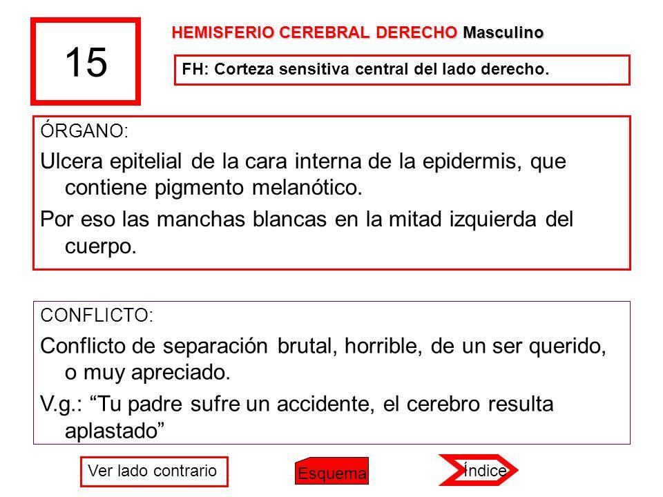 15 HEMISFERIO CEREBRAL DERECHO Masculino. FH: Corteza sensitiva central del lado derecho. ÓRGANO:
