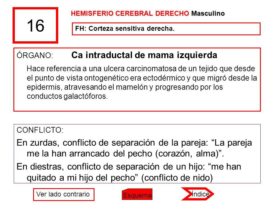 16 HEMISFERIO CEREBRAL DERECHO Masculino. FH: Corteza sensitiva derecha. ÓRGANO: Ca intraductal de mama izquierda.