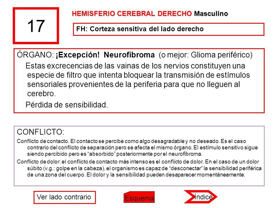 17 ÓRGANO: ¡Excepción! Neurofibroma (o mejor: Glioma periférico)