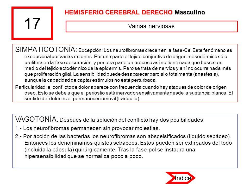 17 HEMISFERIO CEREBRAL DERECHO Masculino. Vainas nerviosas.