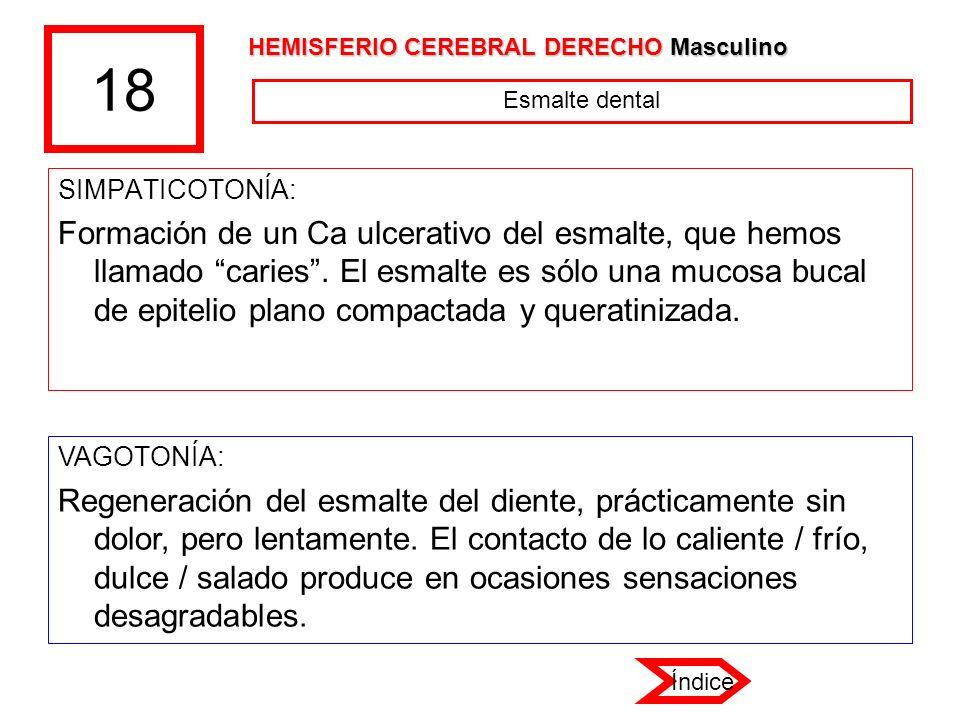 18 HEMISFERIO CEREBRAL DERECHO Masculino. Esmalte dental. SIMPATICOTONÍA: