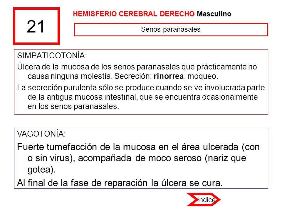 21 HEMISFERIO CEREBRAL DERECHO Masculino. Senos paranasales. SIMPATICOTONÍA: