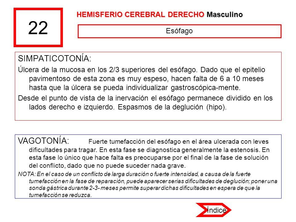 22 HEMISFERIO CEREBRAL DERECHO Masculino. Esófago. SIMPATICOTONÍA: