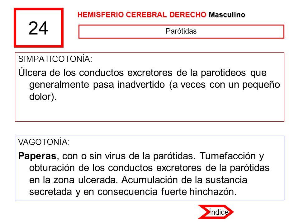 24 HEMISFERIO CEREBRAL DERECHO Masculino. Parótidas. SIMPATICOTONÍA: