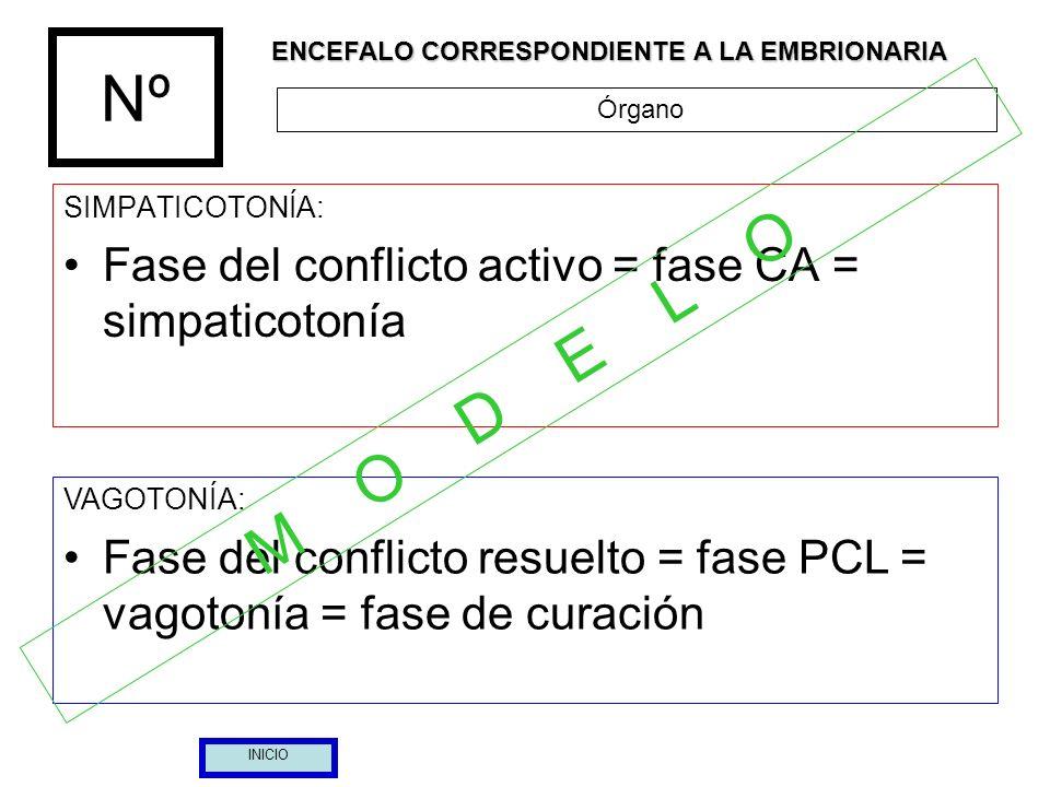 Nº M O D E L O Fase del conflicto activo = fase CA = simpaticotonía