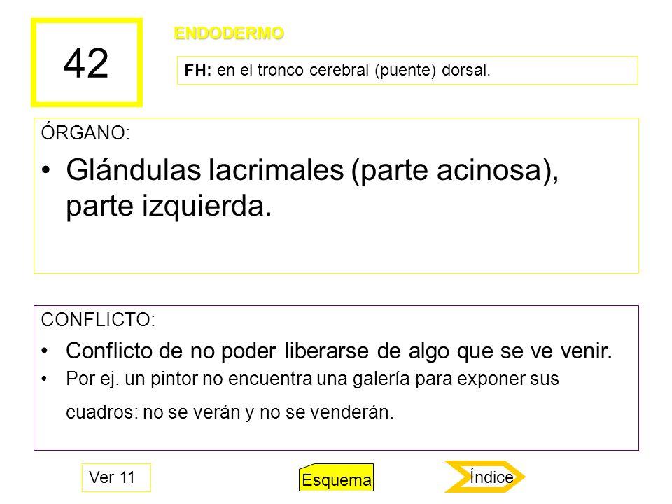 42 Glándulas lacrimales (parte acinosa), parte izquierda.